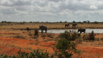 Vacations and Travel - Dallago Tours Kenya Tanzania Safaris Ltd - ScrollList.com